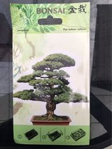 Bonsai Tree Starter in Spangdahlem, Germany