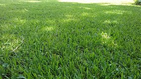 Lawn care in Kingwood, Texas
