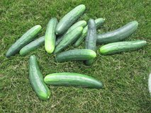 GARDEN FRESH CUCUMBERS in Joliet, Illinois