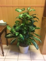 Faux Indoor Plant Tree in Baumholder, GE