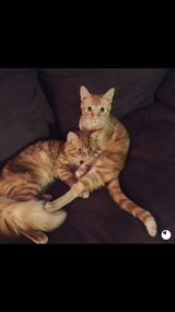 Looking to rehome two male cats in Warner Robins, Georgia