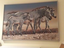 Zebras painting in Naperville, Illinois