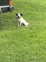 Free dog in Fort Campbell, Kentucky