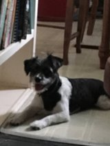 lost dog in Mayport Naval Station, Florida