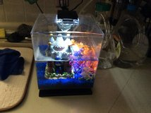 Blue and green beta fish with gallon tank. Needs a new home in Alamogordo, New Mexico