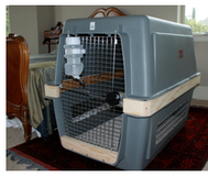PETMATE INTERNATIONAL AIRLINE  DOG CRATE: Brand New in CyFair, Texas