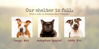 Clear the Shelter Pasadena! in Pearland, Texas