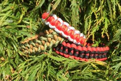 550 Cord Bracelet in Fort Lewis, Washington