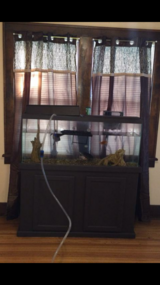 55 gal tank n stand in Plainfield, Illinois