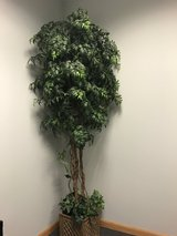 7' artificial /fake plant in Shorewood, Illinois