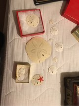 Collection of sand dollars in La Grange, Texas