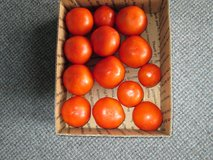 GARDEN FRESH ORGANIC TOMATOES in Joliet, Illinois
