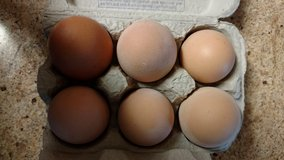 Fresh Eggs in Morris, Illinois