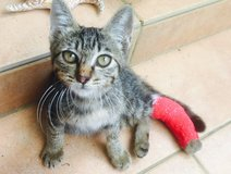 Kitten seeks a home in Okinawa, Japan