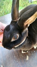 Rabbit in Warner Robins, Georgia