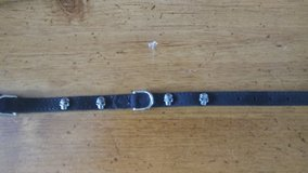 Suede dog collar with small skulls in Kansas City, Missouri