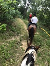 "Double""O"" Ranch Horse Boarding & Training & Lessons in Fort Leonard Wood, Missouri"