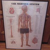 Framed Nervous System Poster 22 x 28 in Shorewood, Illinois