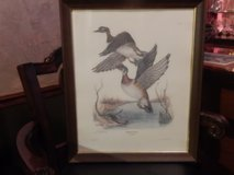 Tony Biagi, Wood Duck Framed Print in Pleasant View, Tennessee