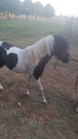 Cute pony in Lawton, Oklahoma