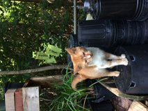 Found- 2-3 months old Tabby cat. in Beaufort, South Carolina