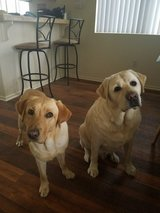 Dog Sitter in Camp Pendleton, California