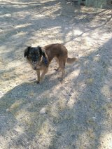 Missing dog in Yucca Valley, California