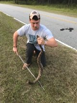 Snake relocation in Fort Benning, Georgia