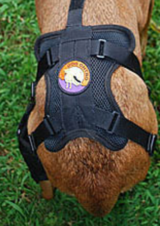 Dog knee brace for torn ACL in Fort Lewis, Washington