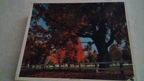 Golden Leaves of Autumn - Red Rock Crossing - Puzzles - 1500 pc. in Bolingbrook, Illinois