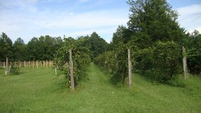 3 houses, vineyard, additional house site, 12 +/- acres - Onslow County in Jacksonville, Florida