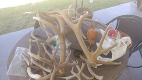 Elk and Deer Antlers in El Paso, Texas