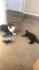Free cat to good home in Nellis AFB, Nevada