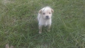 Mix Breed Pups in Cleveland, Texas
