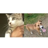 These two needs homes! in Roseville, California