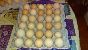 30 Organic Brown Eggs in Shaw AFB, South Carolina