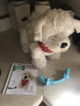 Georgie interactive puppy in New Lenox, Illinois