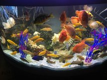 Fishes in Fort Rucker, Alabama
