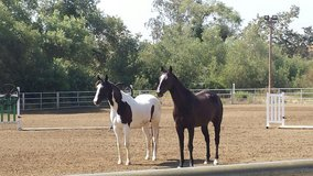 Seeking  a few people who would like to take care of a two horses, currently on Camp Pendleton in Camp Pendleton, California