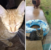 Free kittens to a good home. in Tacoma, Washington