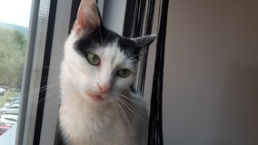 SOS *** Milly - sweet Rescue Cat in Ramstein, Germany