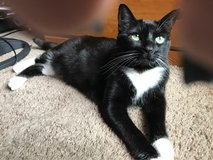 Sweet cat GG needs a home in Travis AFB, California