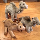Stuffed animals- group of 3 camels in Ramstein, Germany