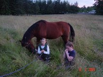 Horse Boarding - Pasture Self Care or FULL CARE AVAILABLE Horse Boarding ! WINTER is COMING.. in Fort Lewis, Washington
