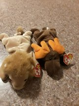 TY Chocolate & Roary beanie babies in Fort Polk, Louisiana