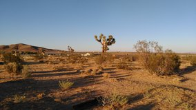 2 Acres On the Mesa, Yucca in 29 Palms, California