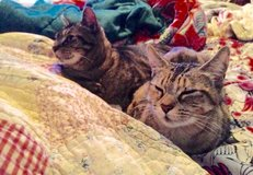 Help Cats please in Camp Lejeune, North Carolina