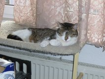 Cute Little Kitty Needs a New Home in Heidelberg, GE