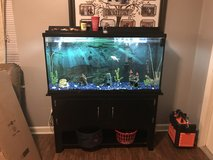 60 Gallon Fish Tank in Moody AFB, Georgia
