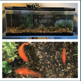 20g tank and fish in Oceanside, California
